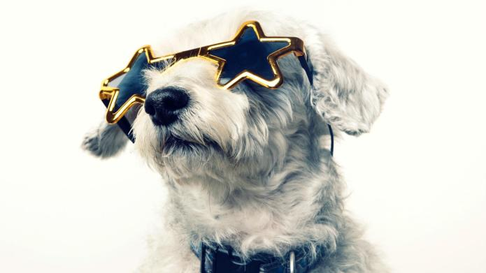 9 Star-struck pets dressed like their