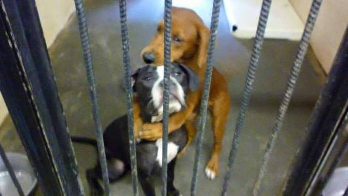 Hugging pups adopted 2 hours after