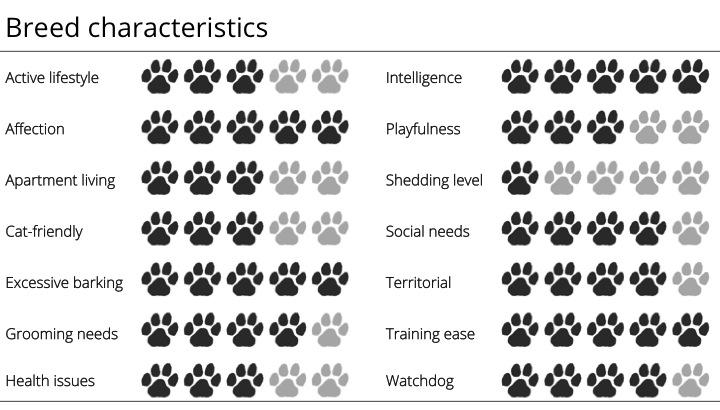 schnauzer breed characteristics