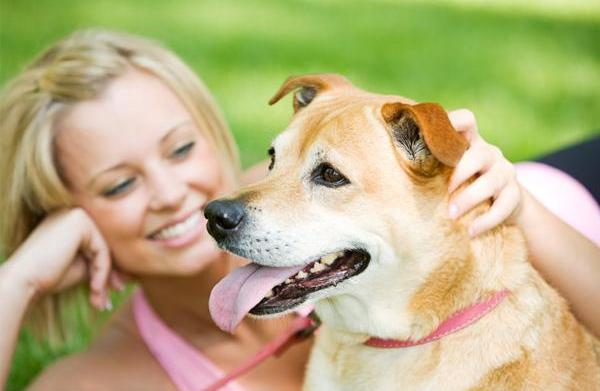 7 Pet safety tips