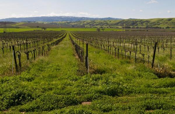 Lesser-known California wine regions