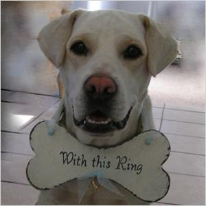 Dog ring carrier