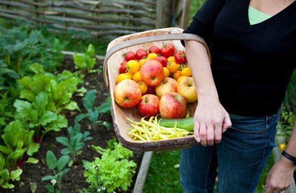Growing your own food in a