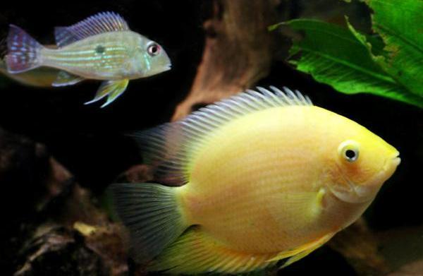 Skin parasites in fish
