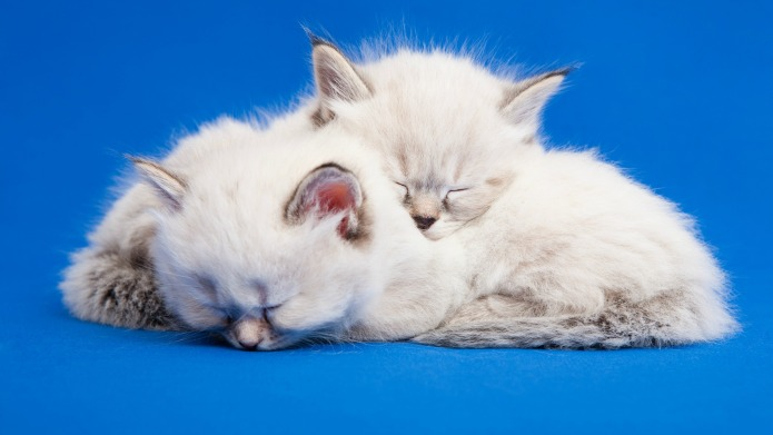 17 Sleepy Kittens That Need a