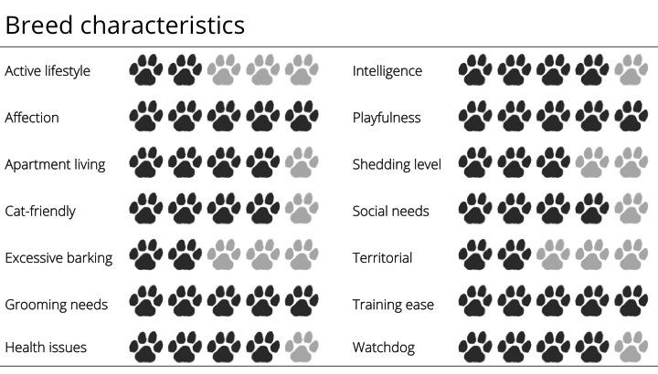 newfoundland breed characteristics
