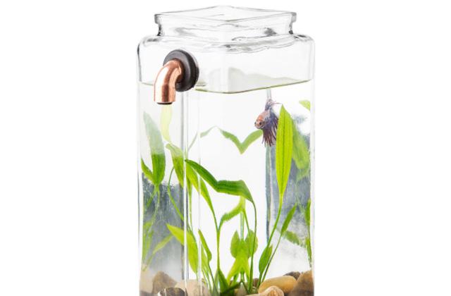 no-clean aquarium
