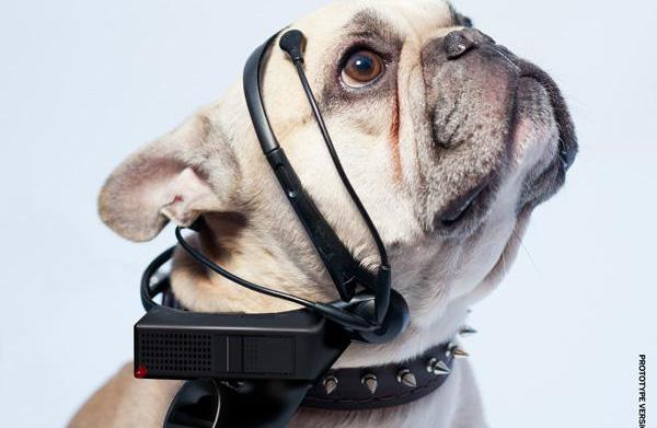 Is this mind-reading gadget for dogs