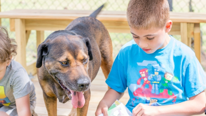 Reading to shelter dogs helped my