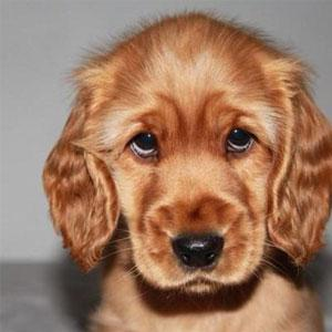12 puppy eyes to swoon over