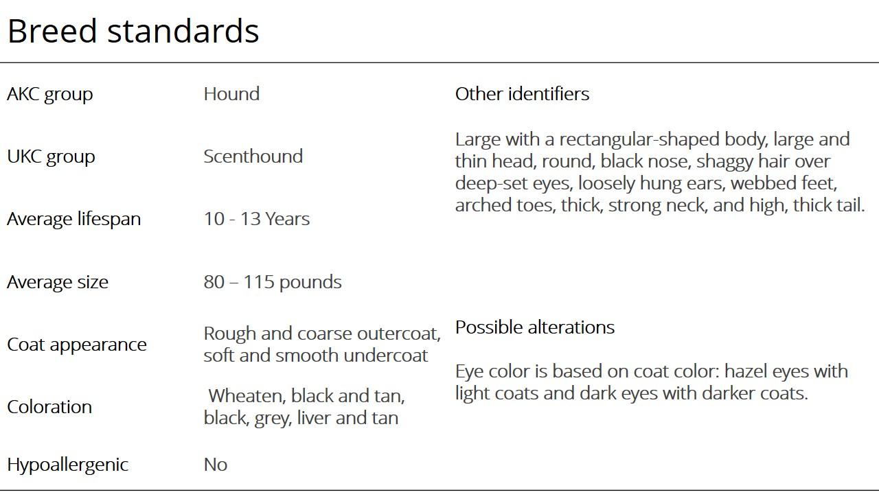 Otterhound breed standards