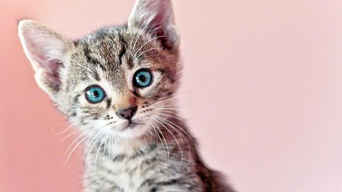 13 Adorable Kitten GIFs That Will