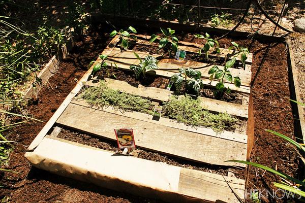 Pallet garden planted