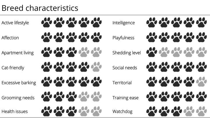 papillon breed characteristics
