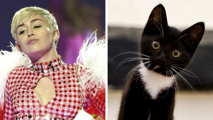 This twerking kitten puts Miley Cyrus
