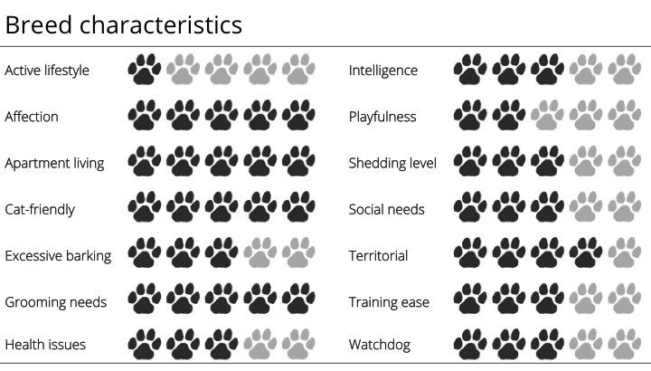 pekingese breed characteristics