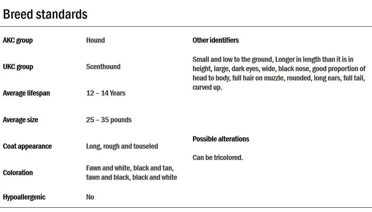 Petit Basset Griffon Vendeen breed standards