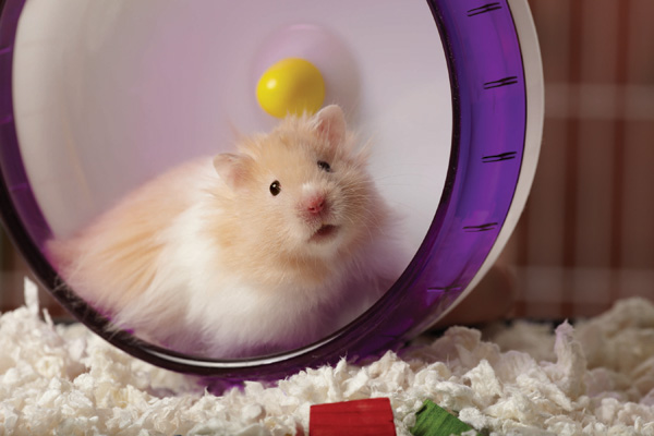 Hamster playing in wheel