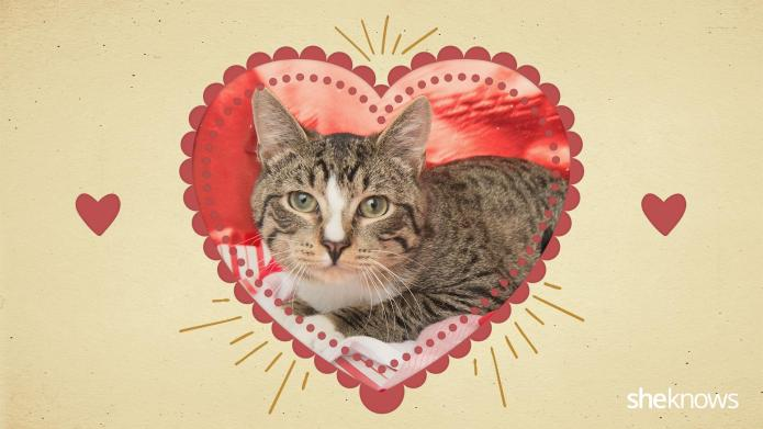 12 Kitty-cat Valentine's Day cards that