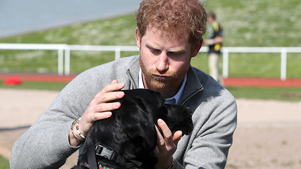Prince Harry with dog