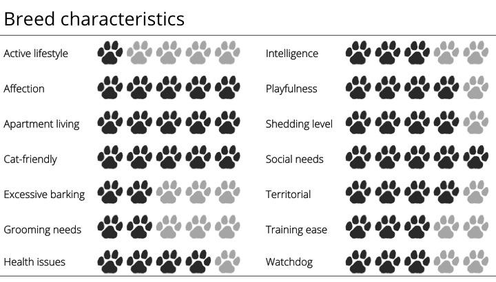 pug breed characteristics