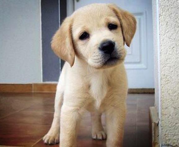 Heart melting puppies 17