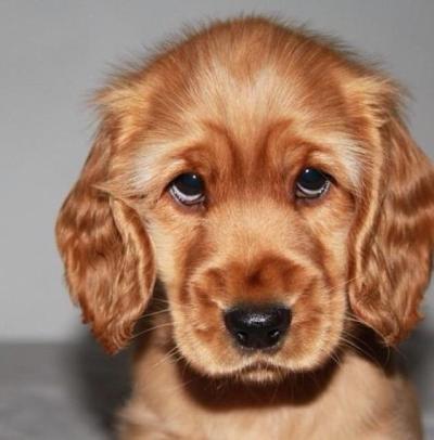 Cute puppy eyes 1