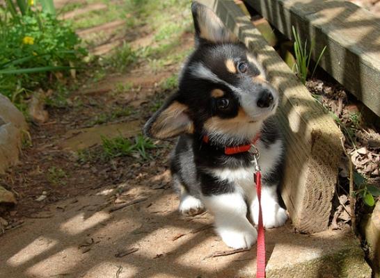Cute puppy eyes 2