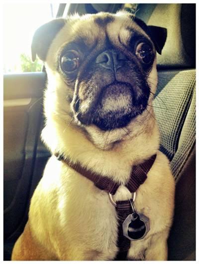 Cute puppy eyes 3