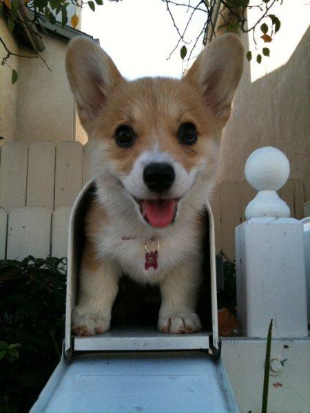 Cute puppy eyes 4