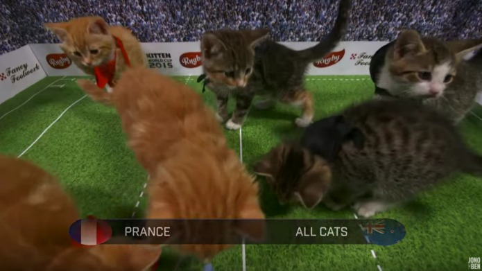 The Kitten World Cup may be