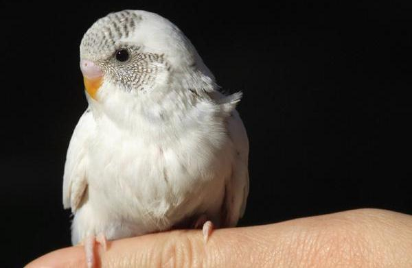 Trim your bird's nails and live