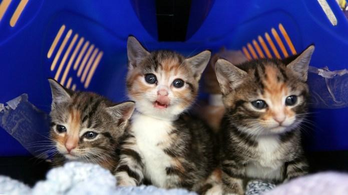 Vile practice of selling kittens for