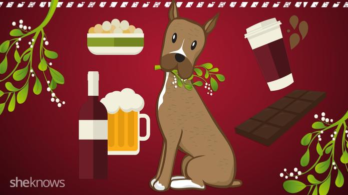 The 10 most harmful holiday dog