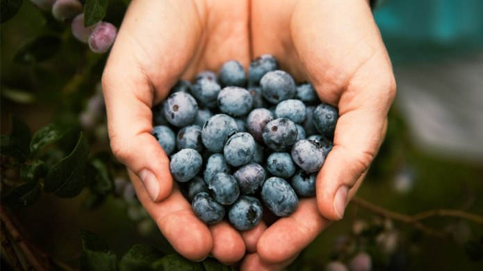 Love Blueberries? Careful, They Might Be