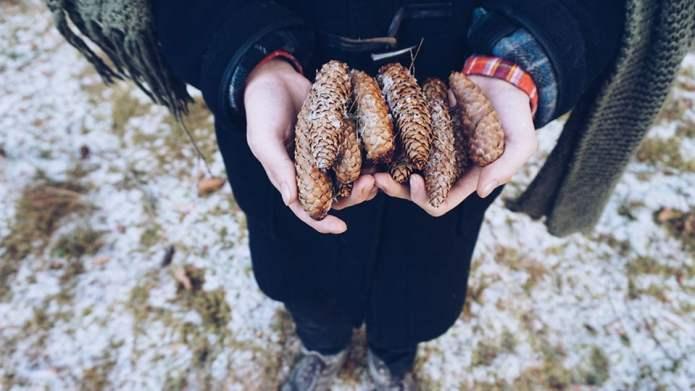 Snow day craft idea: Make pinecone