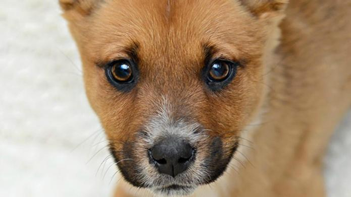 18 Adoptable dogs that could be