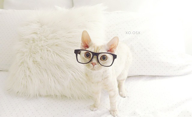 15 Cats in glasses that have