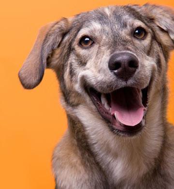 Seasonal medications your pet should be