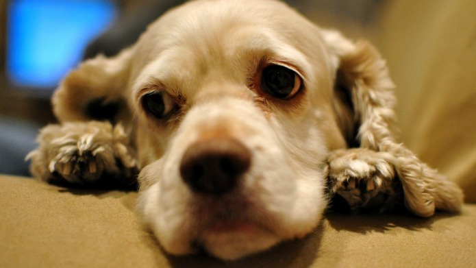 Dogs take anti-depressants to deal with