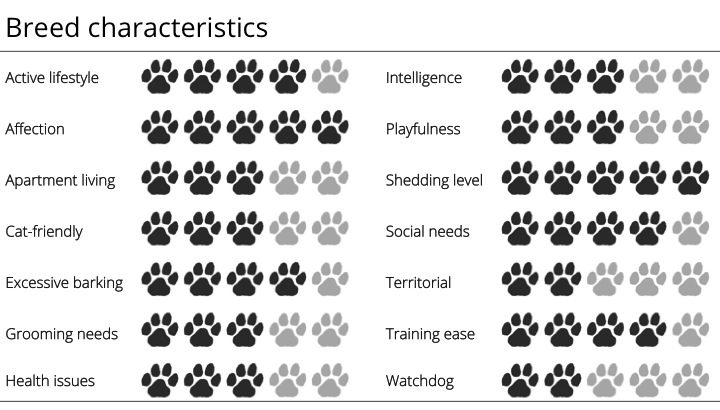 samoyed breed characteristics
