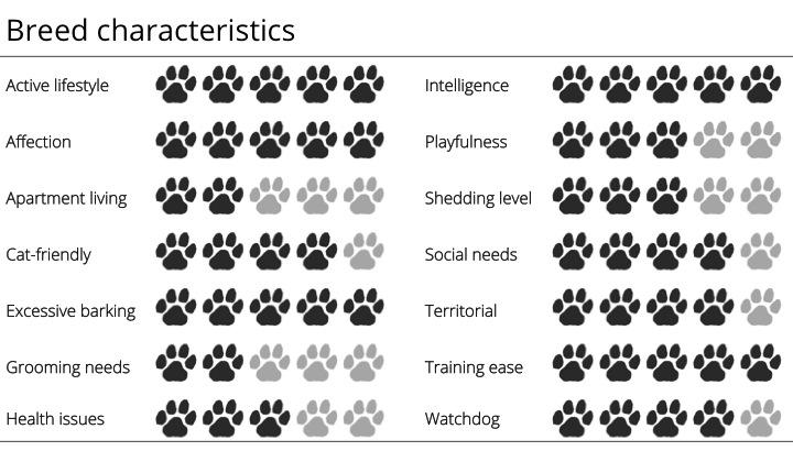 sheltie breed characteristics