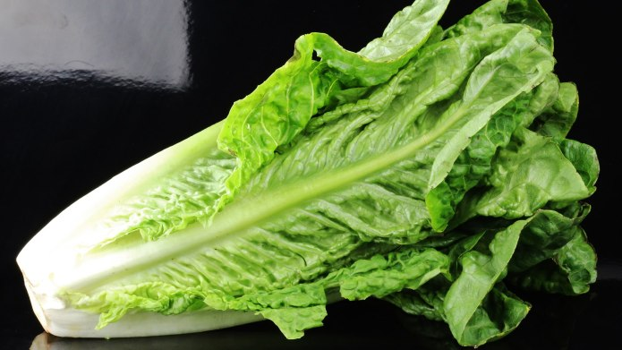 Throw Out Your Romaine Lettuce ASAP