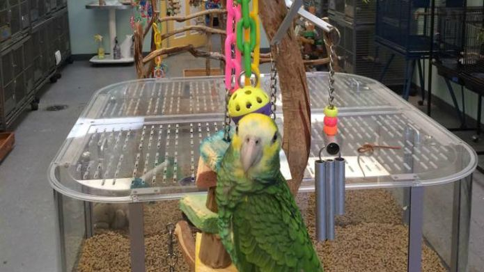 This parrot's cover of 'Everything Is