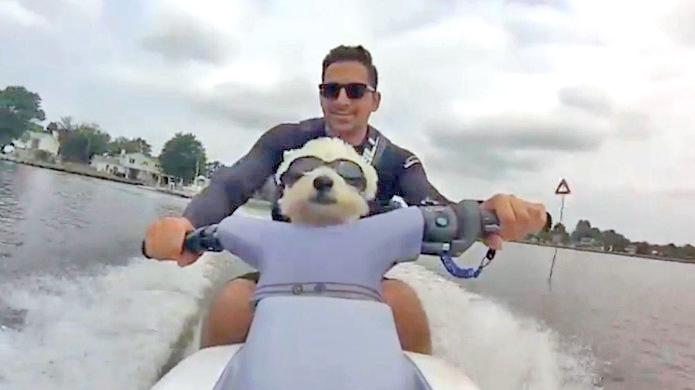 Westie cruising on a Jet Ski