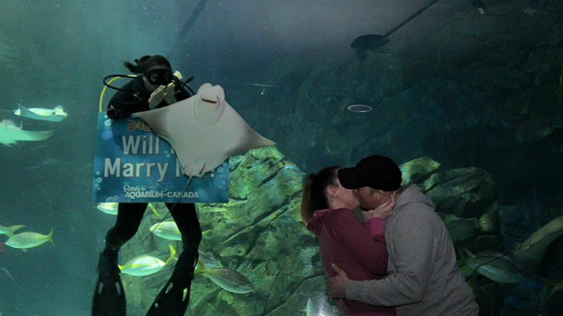Couple's romantic proposal photobombed by a stingray