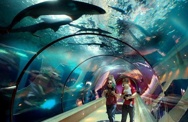 Oregon Coast Aquarium – Newport, Oregon