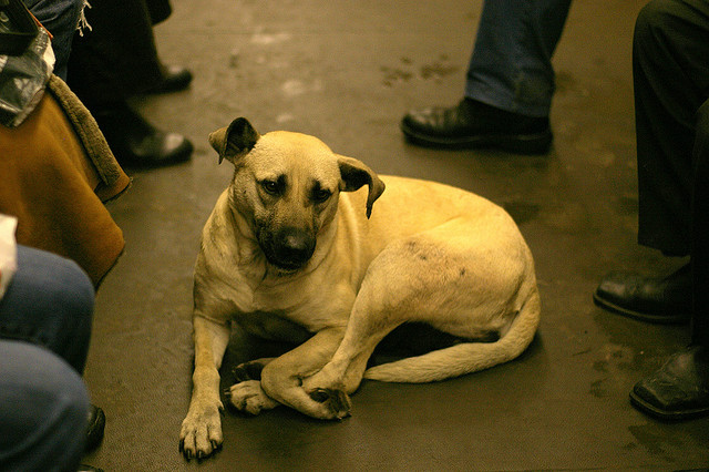 Subway dog of Moscow