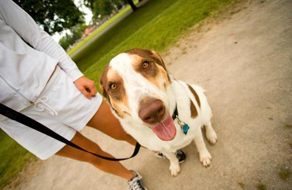 Top 10 Dog parks in Australia