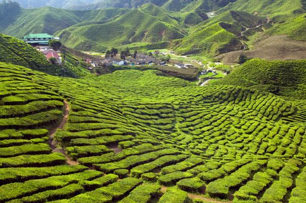 Malaysia's Cameron Highlands